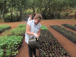 Karura Forest Service Project